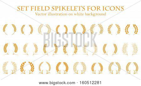 Ears of wheat or rice set icons. Agricultural spikelets of wheat symbols on a white background. Organic farming farm crop seeds bread packaging or label beer. Vector ears of wheat.
