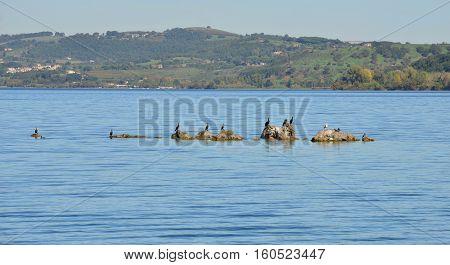 Cormorants seagulls and crows on Lake Bracciano reef