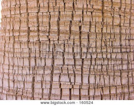 Palm Bark Detail