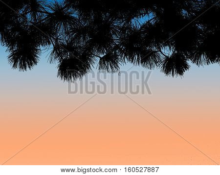 silhouette pine leaves against sunset sky background.