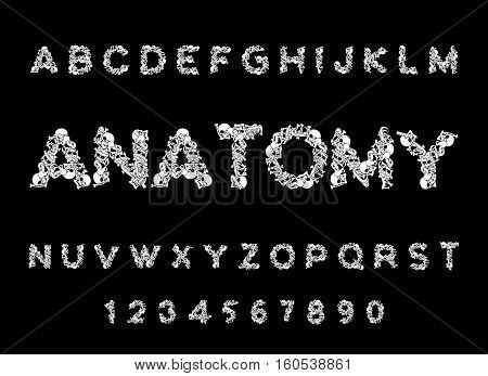 Anatomy Font. Skeleton Abc. Letters Bones. Skull And Spine. Jaw And Pelvis. Hell Scary Alphabet