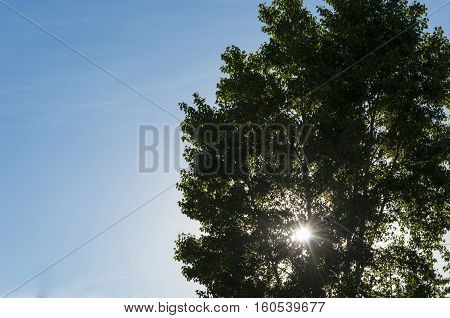 Bright beams of the sun make the way through branches of a high tree