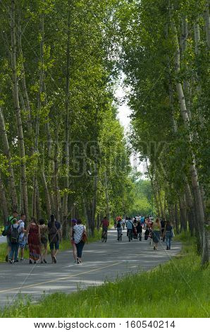 The small group of people walks in the park on the wide road in the country