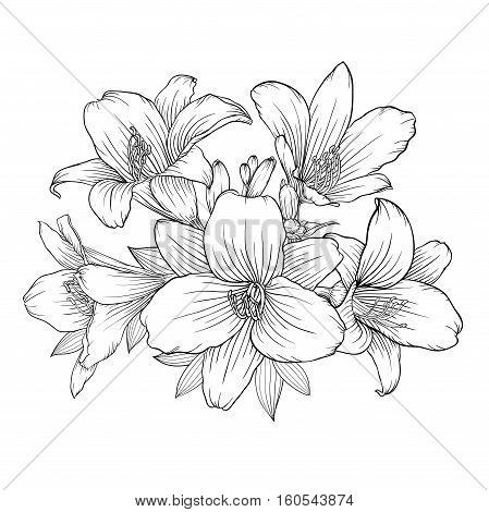 beautiful monochrome black and white bouquet lily isolated on background. Hand-drawn. design greeting card and invitation of the wedding birthday Valentine's Day mother's day and other holiday