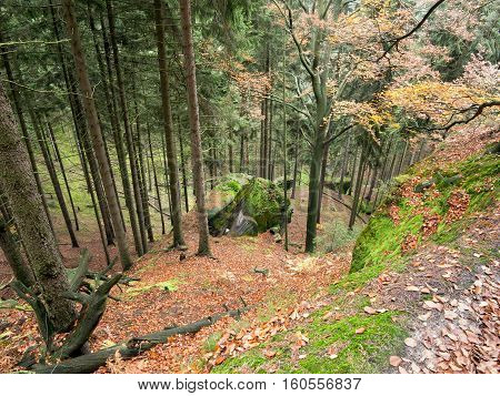 Deep ravine in the coniferous forest - Bohemian Switzerland