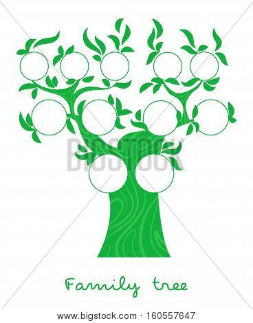 Family tree chart, genealogical tree, family portraits, pedigree photo frame thin line style vector