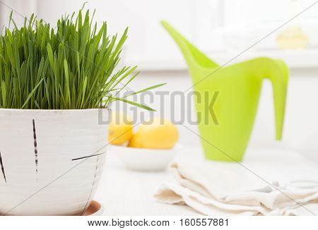 wheat grass juice on white wooden table