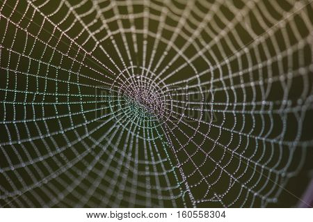Spider web.structure and pattern that will make the spider web in the morning in the mountains in the national park