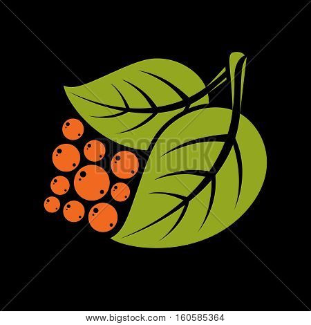 Two Simple Green Vector Leaves With Orange Seeds Of Deciduous Tree, Stylized Nature Element. Ecology