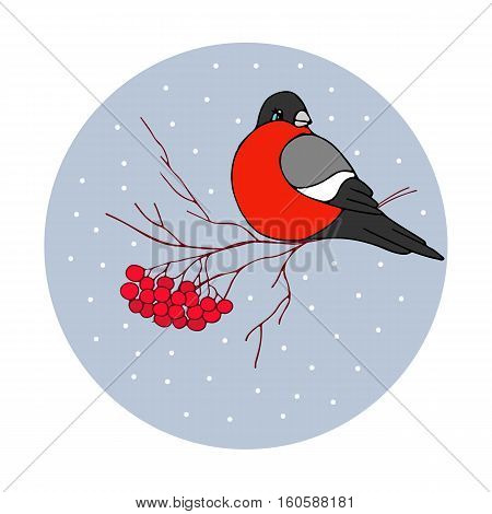 Christmas vector illustration - bullfinch with ashberries with holidays greeting