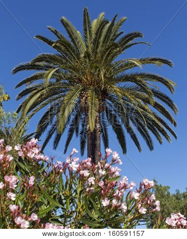 Tropical Palm trees and beautiful flowers in San Diego.
