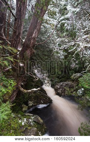 A forest stream along the Enchanted Walk in Cradle Mountain National Park, Tasmania
