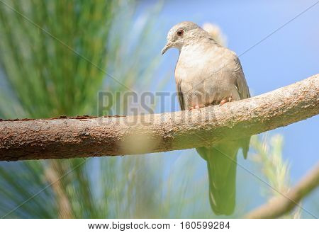 Bird On A Tree Branch Watching Carefully. Bird With Red Eyes.