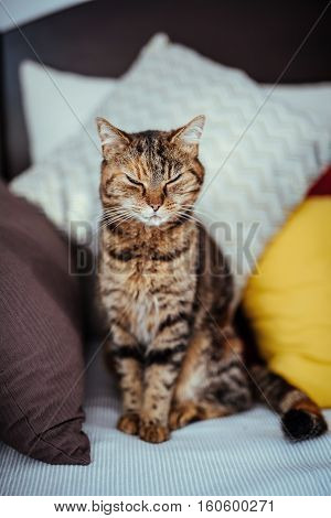 Domestic cat with closed eyes sitting on a couch
