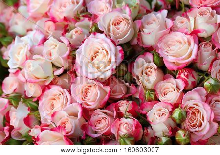 Many red roses natural floral background .