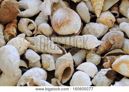 Shell Fosils Texture