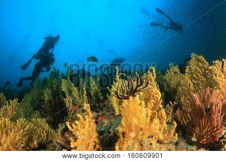 Scuba diving coral reef and fish