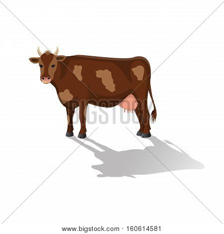 Brown spotted cow isolated .Cute farm cattle domestic animal. Vector flat ilustration on a white background.