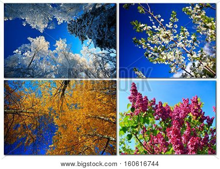 Four seasons in the forest nature color