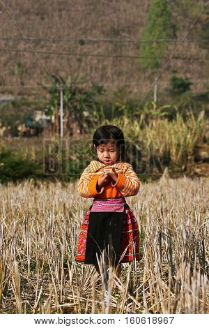 SON LA, VIETNAM - JAN 15: Undefined Hmong girl posing when visitors coming to her village on January 15, 2010 in Moc Chau plateau, Son La province, Vietnam.