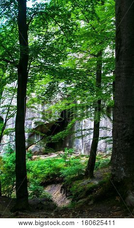 landscape in the forest trees among the rocks