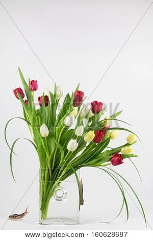 Spring tulip arrangement in glass vase with leopard slugs and copy space