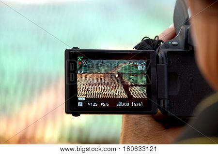 hand holding the Digital camera, shoot of landscape photo using liveview.