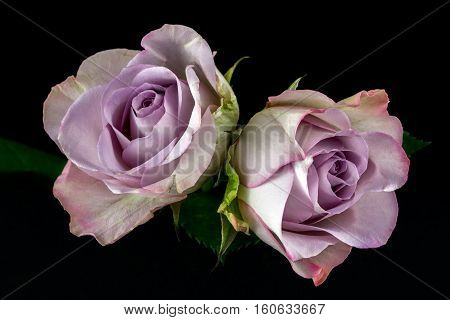 Close-up of bouquet pastel roses. Photography of nature.