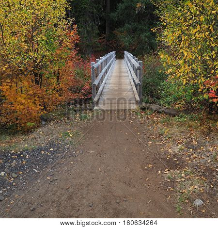 Bright and colorful foliage around a foot bridge on the Mckenzie River Trail near Clear Lake in Western Oregon on a fall day.