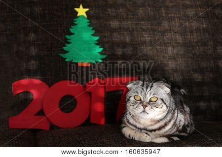 Holidays / Beautiful Christmas and New Years scene / 2017 / British Shorthair kitten