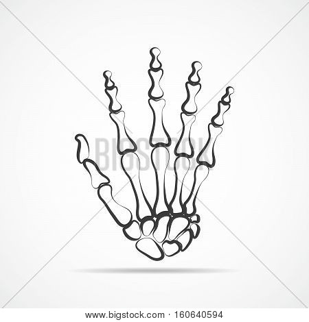 Bones of hand on light background. Skeleton hand. Vector illustration. The skeleton human hand.