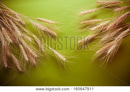 green background with group of wheat spica