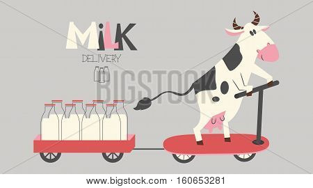 Vector cheerful cow delivers milk bottles on a scooter. Organic farm milk delivery service.
