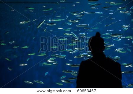 LA ROCHELLE, FRANCE - JULY 3, 2016: Visitor looking as the European pilchards (Sardina pilchardus) swim in La Rochelle Aquarium, France.