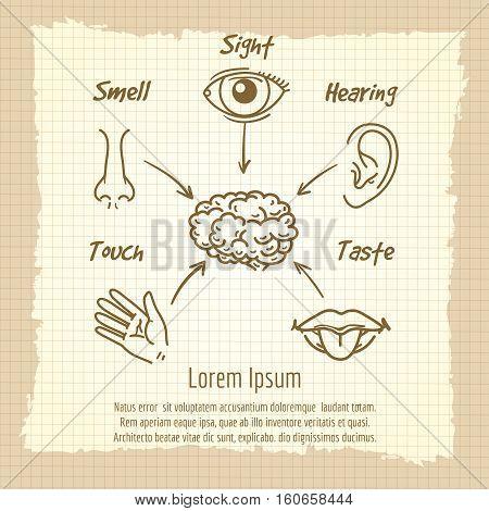 Human sense organs synopsis vintage poster design. Vector illustration