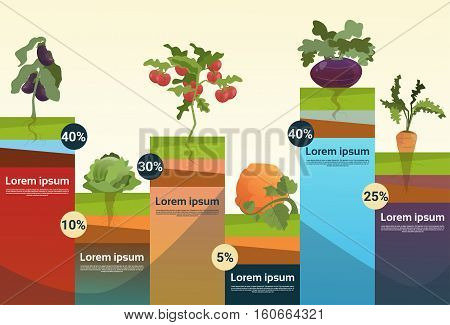 Farm Organic Eco Vegetables Grocery Infographic Flat Vector Illustration