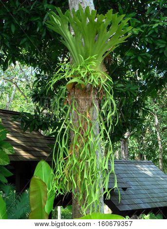 photo scenery beautiful amazing plants epiphytes - Ferns