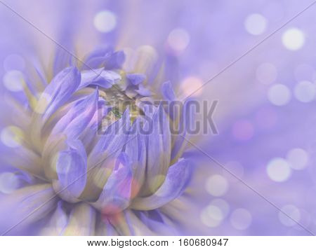 blue-pink blurred background dahlia flower. flower on the blurred background. floral composition. floral background. Nature.