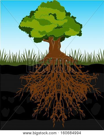 The Big tree and root in ground.Vector illustration