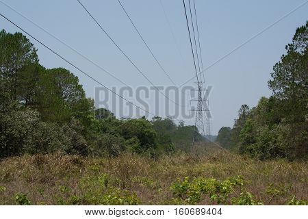 Antenna and transmission line built through the forest to cut trees along the way are just endless grass below the lower horizontal line.