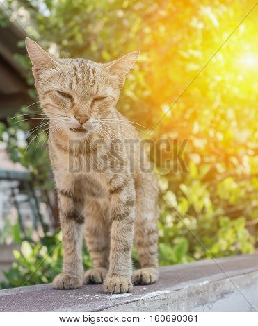 Cat grey with pitiable sad eyes. and colorful blur background with sunset light tone.