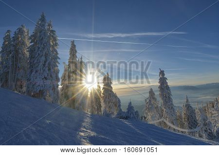 Winter snow covered fir trees on mountainside on blue sky with sun shine background