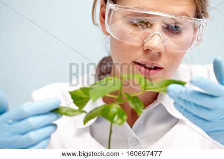 Female botanist examining plant at the laboratory