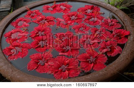 Spa red hibiscus flowers floating on the water surface in ceramic bowl