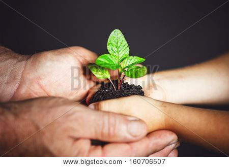 concept generation and development. elderly man and baby holding hands green plants sprout