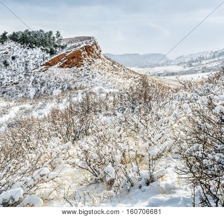 Colorado foothills in fresh snow - sandstone cliffs and meadows of Lory State Park near Fort Collins