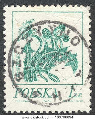 MOSCOW RUSSIA - CIRCA NOVEMBER 2016: a post stamp printed in POLAND shows a dandelion the series