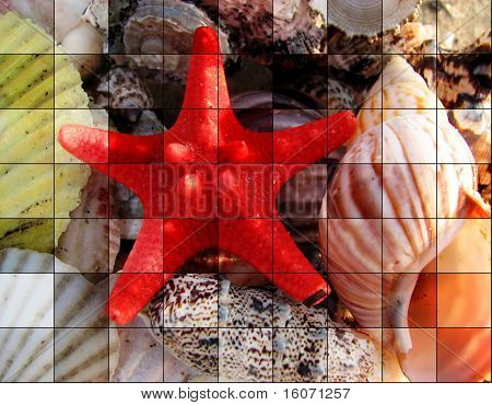 tiles of Star with colorful seashells