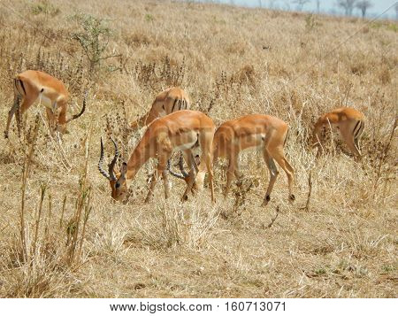 Afrika  /  Tierwelt  /  Natur  /  Hintergrund  /  Nature