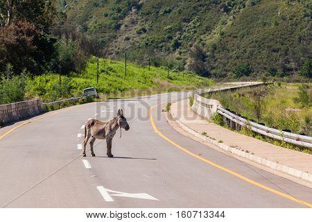 Donkey Middle Road